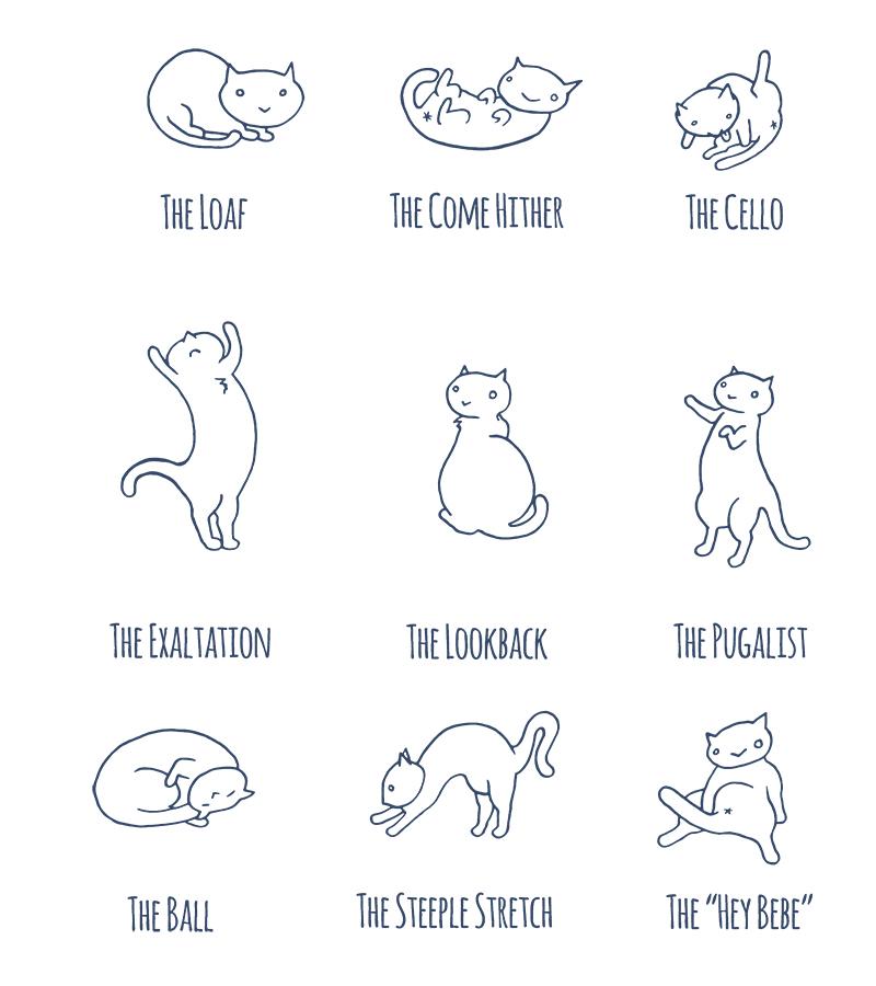 Cat Position